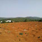 Khoảng cách trồng Sầu Riêng